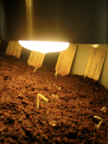 Houston, we have germination!