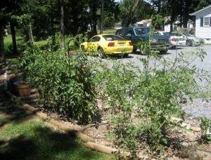 2008 veggie garden