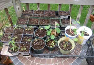 seeds20090419