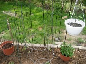 tomato trellis supports