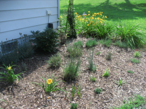 from a few weeks ago - I've since added 2 coreopsis in the middle of the carnations on the left