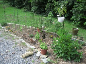 the veggie garden a couple days ago