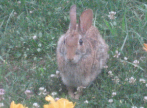 I <3 his little wabbit feet!