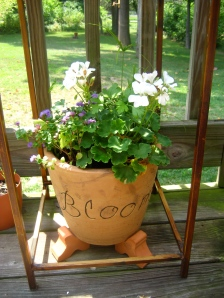 the larger bloom pot