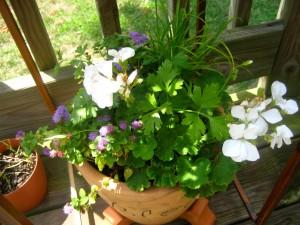(false) geranium, mystery blue flower, parsley, crazy spike grass