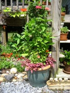 (tall!) zinnias (from seed!) dahlias, pink thingies, spike