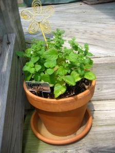 this simple pot makes me happy - lemon balm from my grandmother and my mother