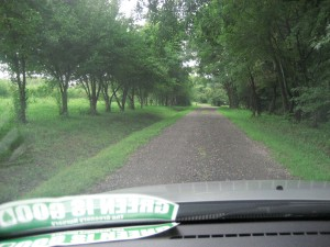 driving to the CSA on a rainy day - tomato field on the left, behind trees