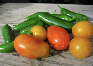 from my garden: jalapenos, golden sunburst tomatoes, roma tomatoes