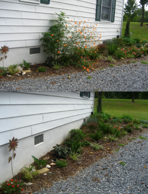 triangle garden - before and after fall cleanup