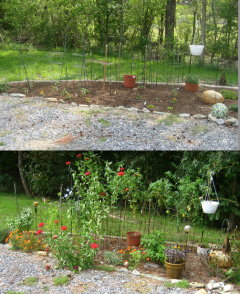 veggie garden - May vs September 30 (I might finally pull up the tomatoes this weekend)