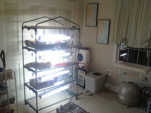 seed shelves