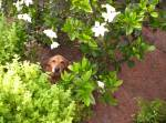 scout-gardenia